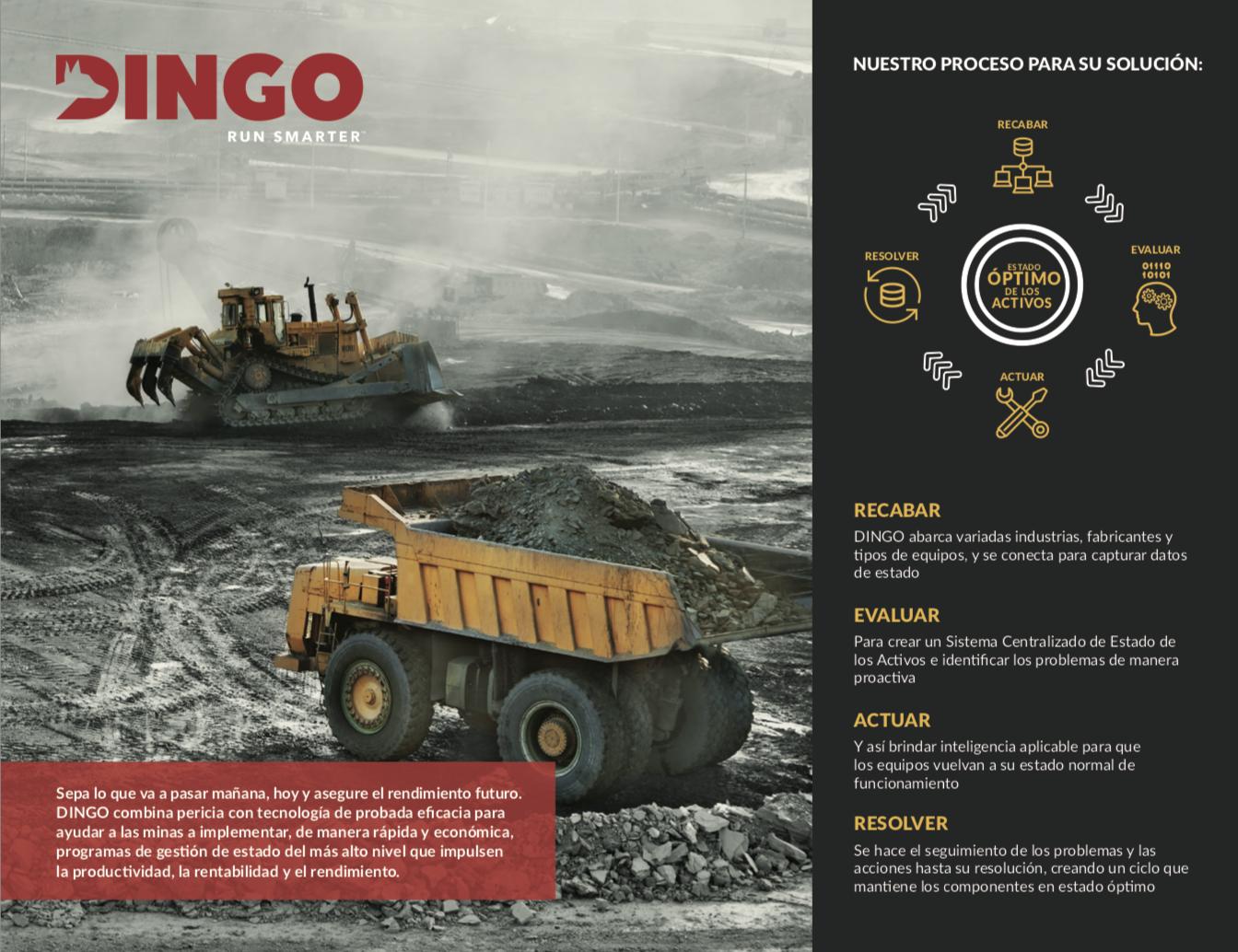 proceso-para-solucion-dingo-1